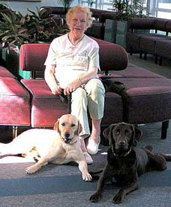 Welcome To Shore Service Dogs Therapy Dog Training