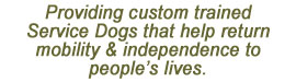 Providing custom trained Service Dogs that help return mobility & independence to people's lives.